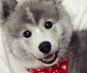 puppy, cute, and adorable image