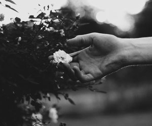 flowers, black and white, and nature image