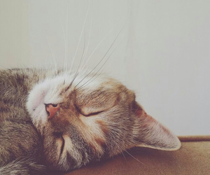cat, cute, and sweet image