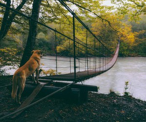 bridge, dog, and river image