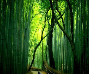 japan and bamboo forest image