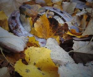 autumn, leaf, and horseshoe image