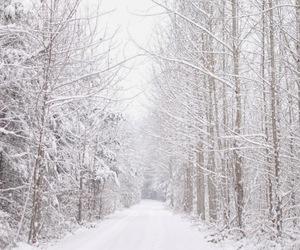 beautiful, nature, and seasons image