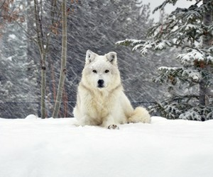 animal, forrest, and snow image