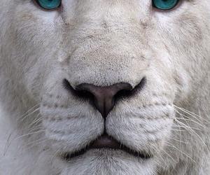 lion, white, and animal image