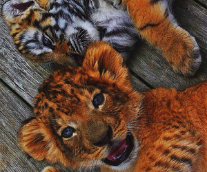 cubs, lion, and tiger image