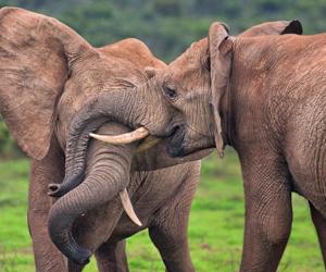 africa, beautiful, and elephant image