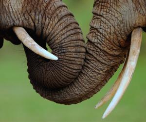 elephant, love, and animal image