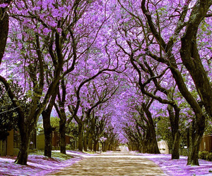 purple, tree, and beautiful image
