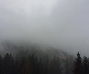 fog, foggy, and nature image
