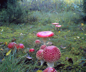 mushrooms image