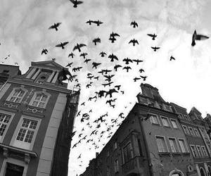 bird, black and white, and building image