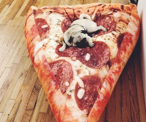pizza, dog, and pug image