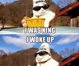 cat, funny, and king image