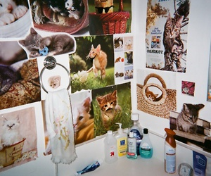 bathroom, cat, and cats image
