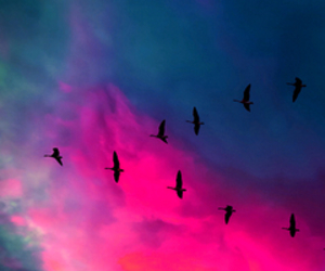 bird, pink, and sky image