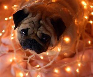 dog, pug, and christmas image