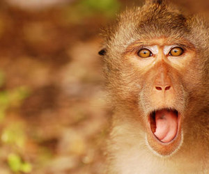 funny, monkey, and cute image