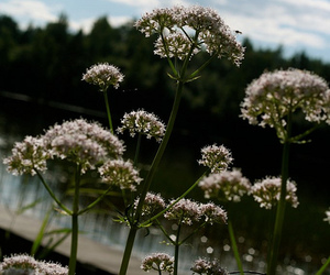 finland, flowers, and summer image