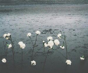 dark, flowers, and pastel image