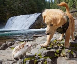 animals, best friends, and cool image