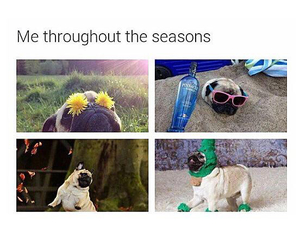 funny, pug, and spring image