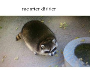 diet, dinner, and fat image