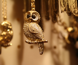 gold, jewerly, and owl image