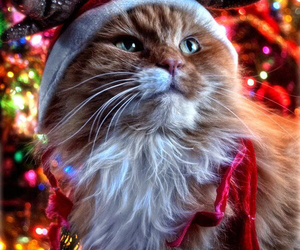 christmas, cat, and kitty image