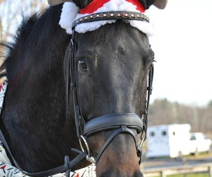 christmas, horse, and winter image