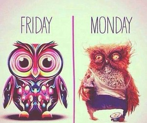 monday, friday, and owl image
