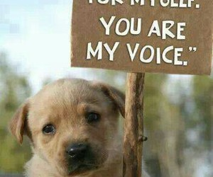 dogs and animals abuse image