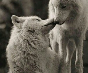 wolf, animal, and kiss image