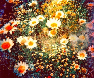 bohemian, flowers, and vintage image