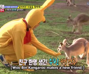 aussie, kangaroo, and woo bin image