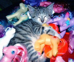 cat and ponies image