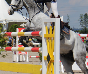 horse, pferd, and show jumping image