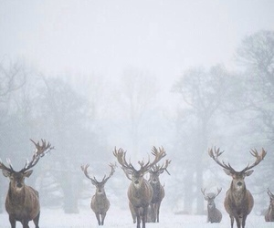 snow, winter, and deer image