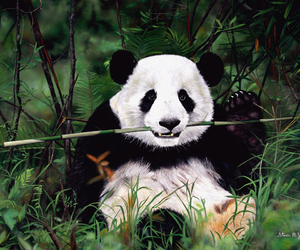 panda, bear, and nature image