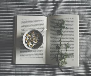 book, flowers, and daisy image