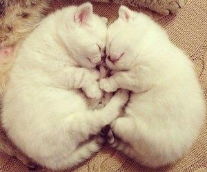 cats, kitten, and sleep image