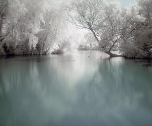 tree, water, and winter image