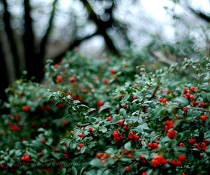 red, beauty, and berries image