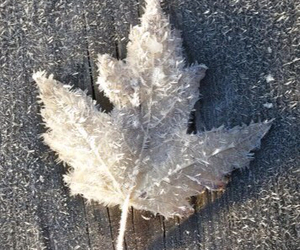 winter, leaf, and snow image