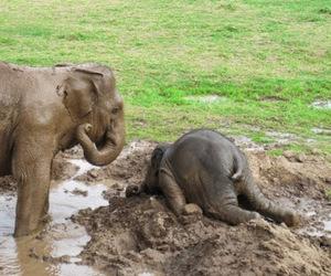 animal, elephant, and mud image