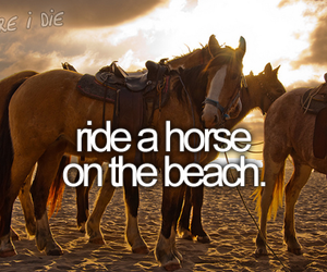 horse, beach, and before i die image