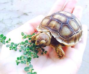 turtle, animal, and nature image