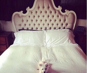 cute, dog, and bed image