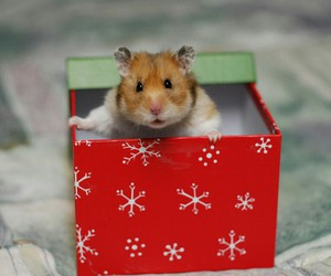 hamster, present, and xmas image