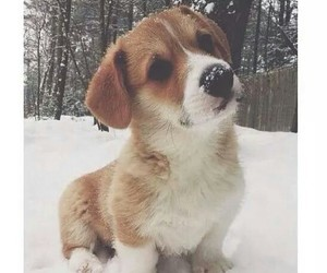christmas, puppy, and winter image